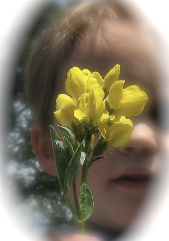 BloomCanyon