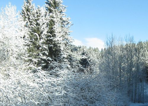 SnowMorning